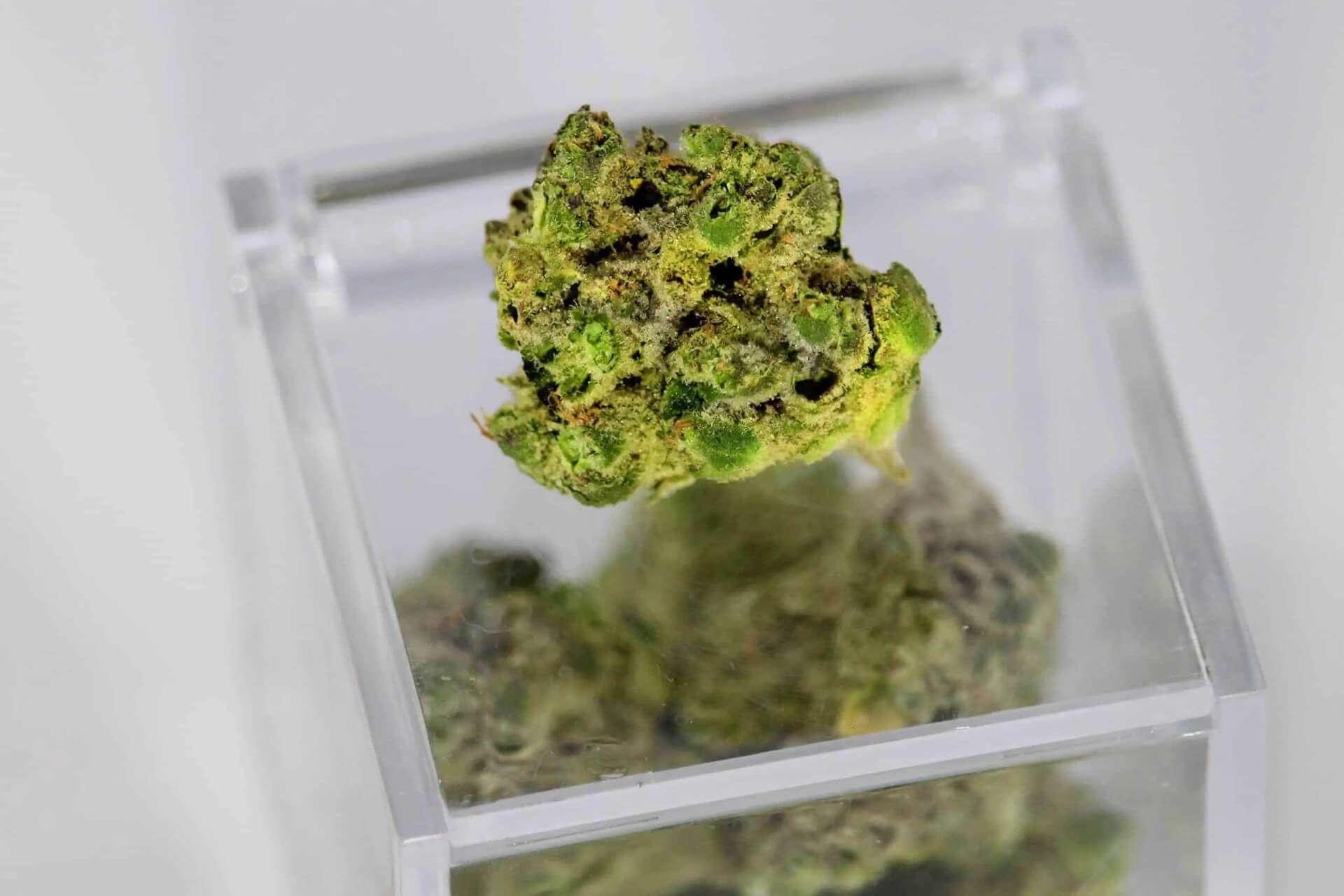 COVID-19 i pacjenci medycznej marihuany: Co musisz wiedzieć