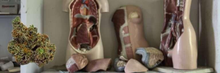 przekroje anatomiczne
