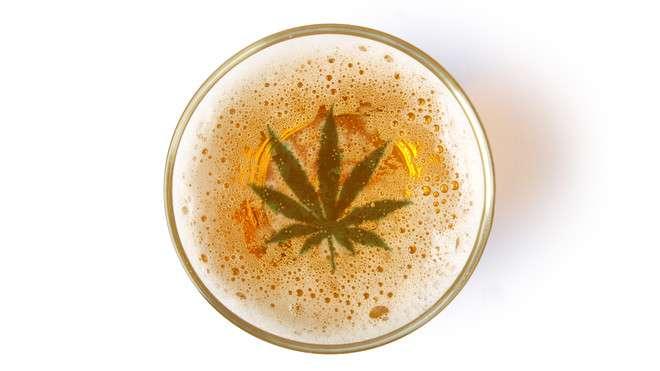 piwa lager i marihuana
