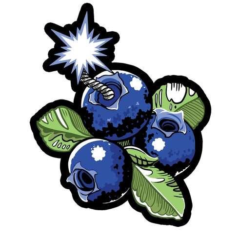 blueberry konopie