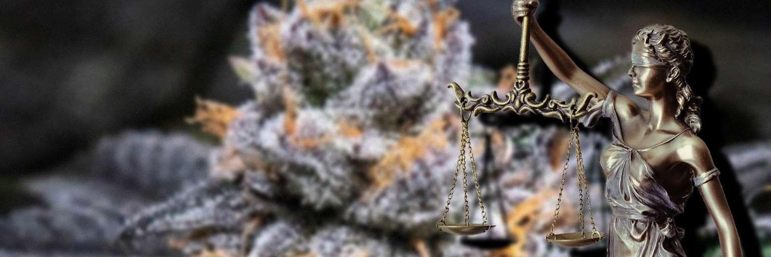 Globalny rynek legalnej marihuany ma się szybko rozwijać