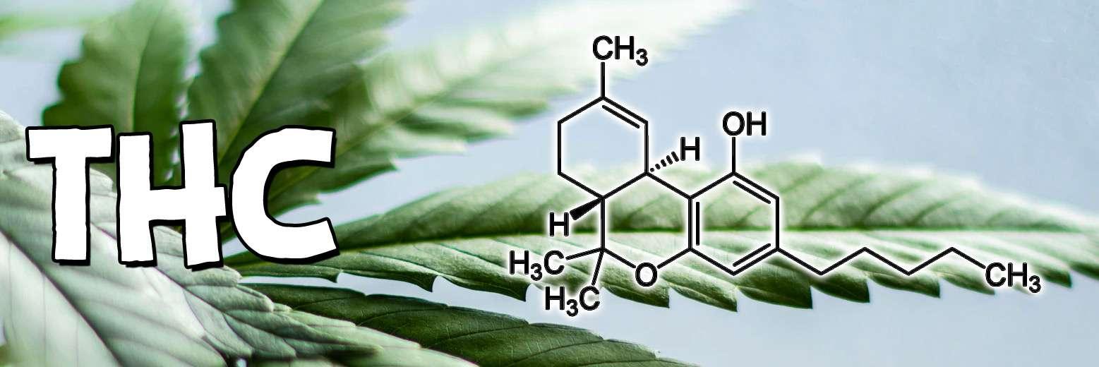 Co to jest THC (tetrahydrokannabinol) i jakie ma działanie?
