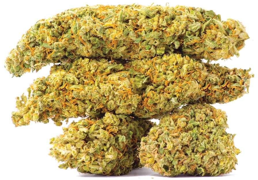 mazar marihuana