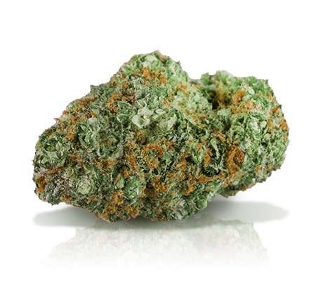 cindirella 99 odmiana marihuany